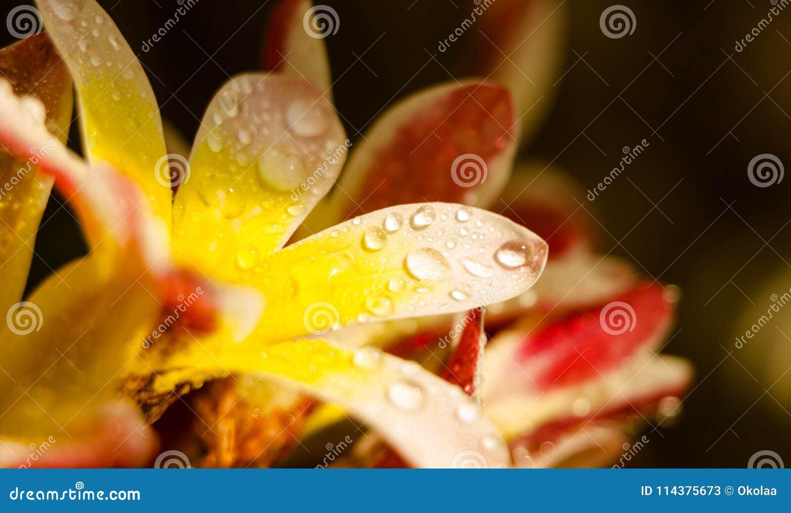 湿花瓣 五颜六色的花卉特写镜头背景