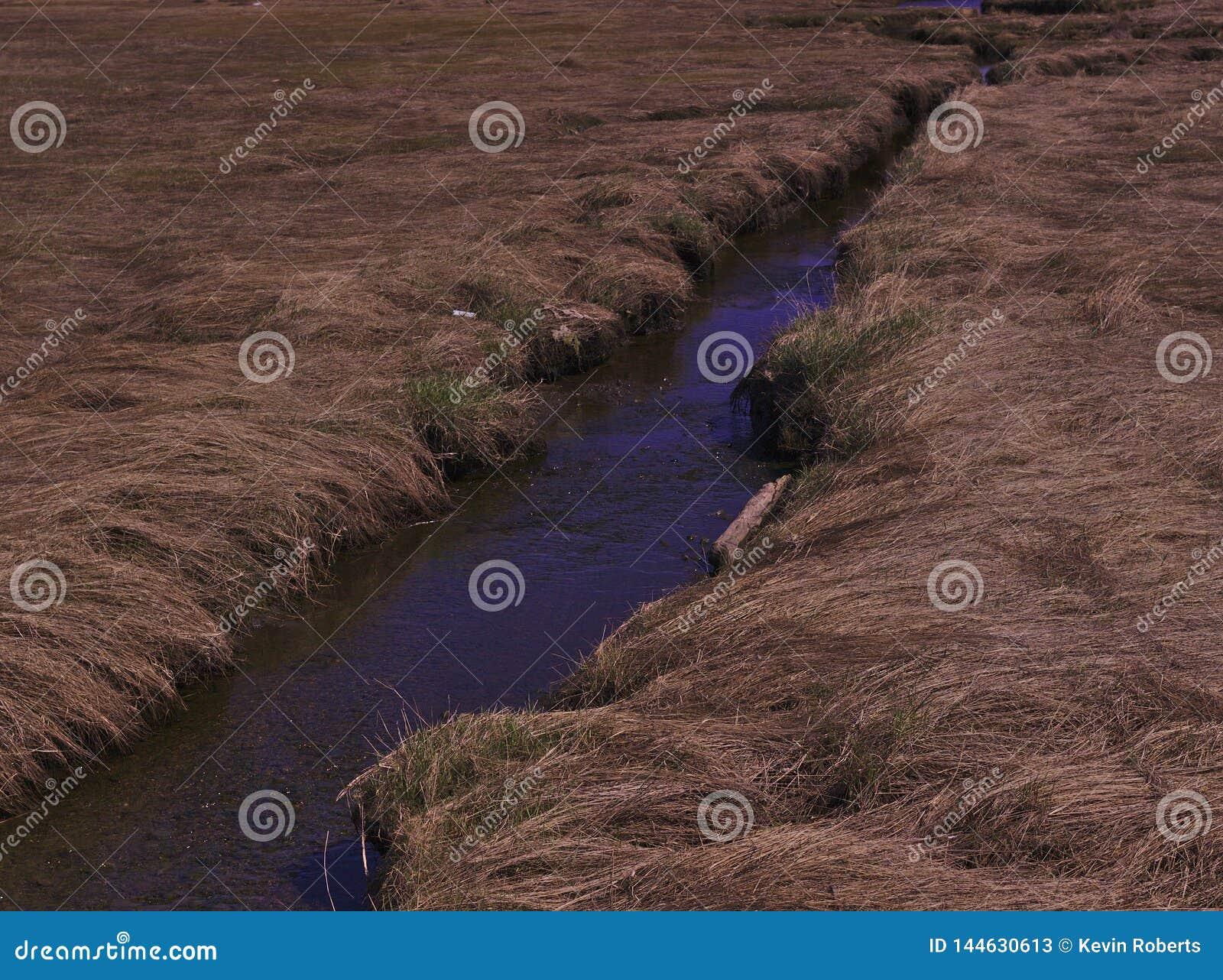 溪褐色草新的成长3485