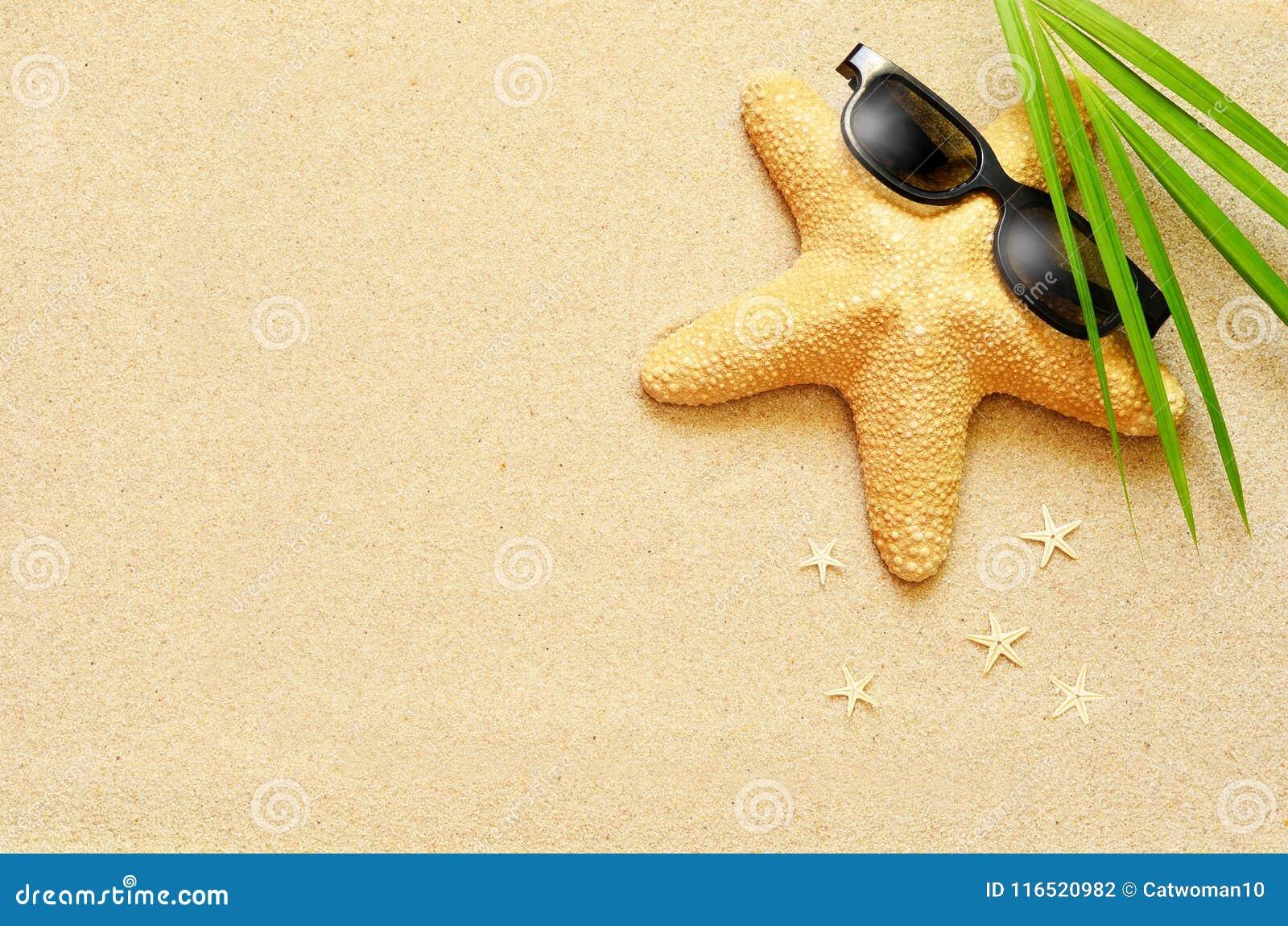 滑稽的海星在夏天靠岸与沙子