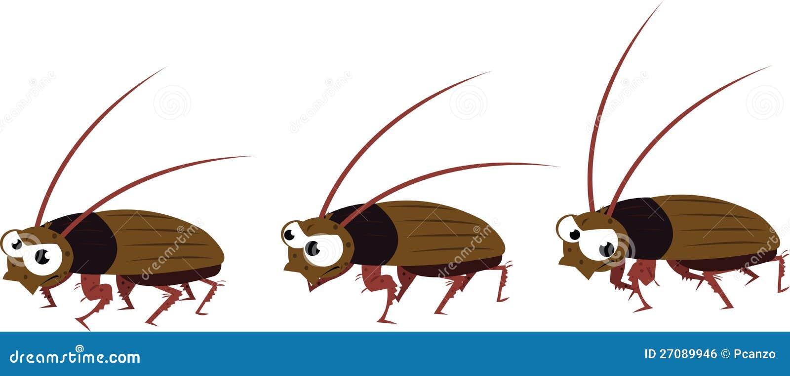 滑稽蟑螂走图片