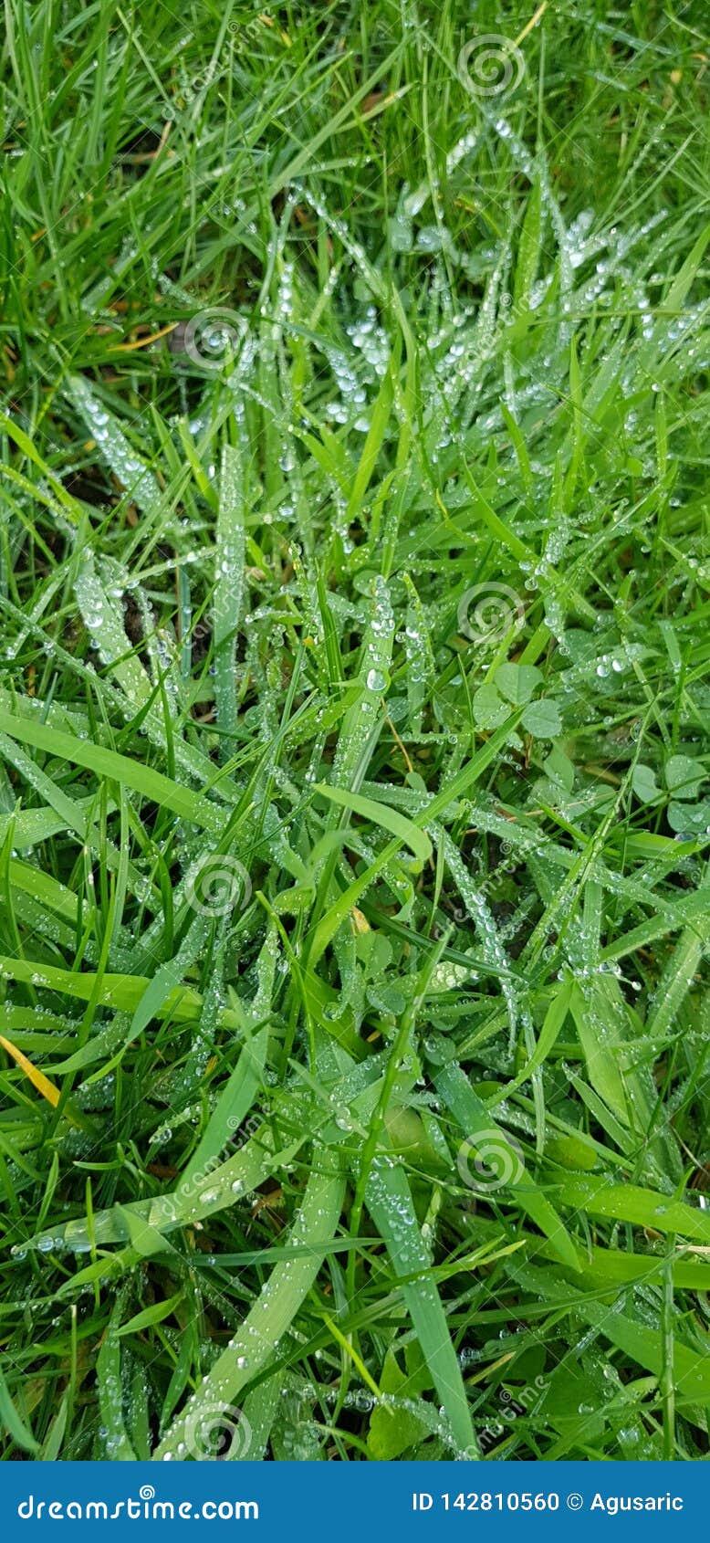 满地露水的草