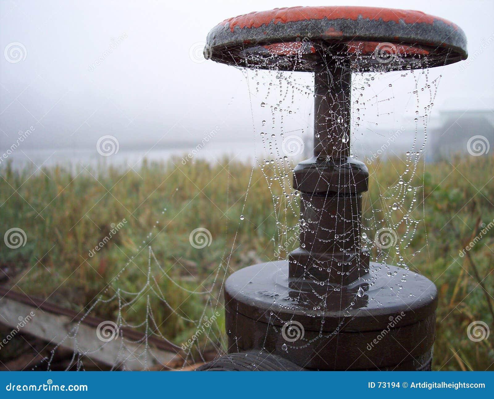 满地露水的spiderweb