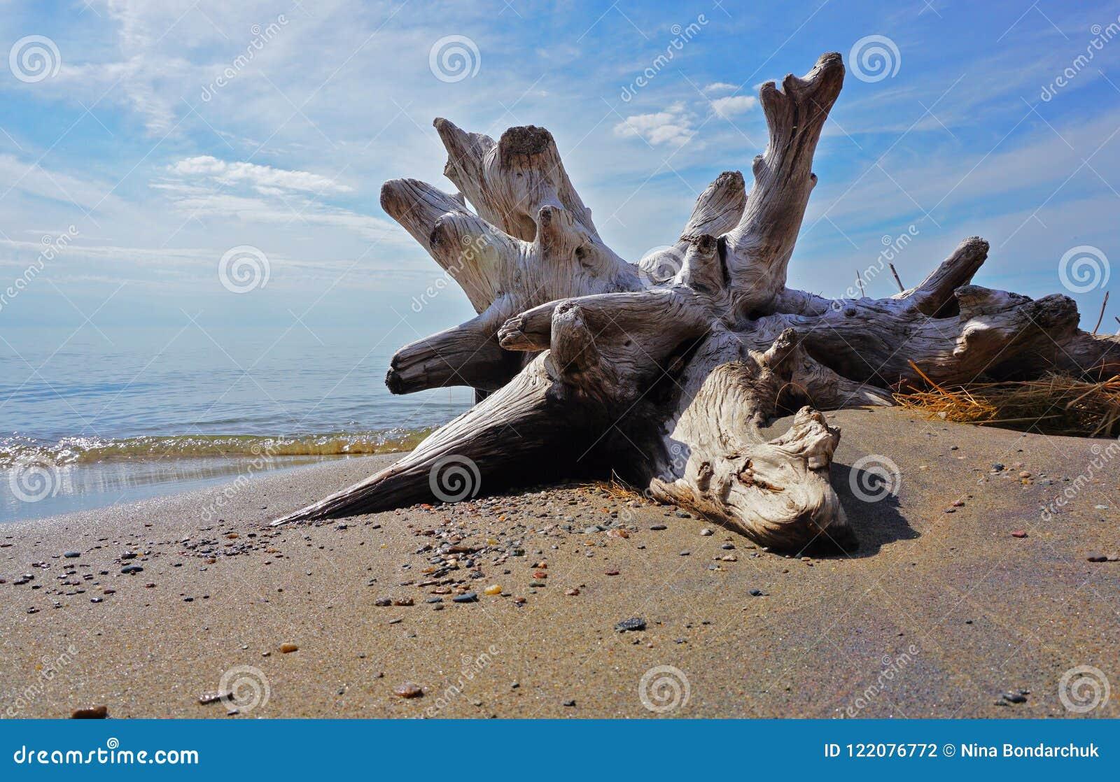 漂流木头、天空、水和沙子