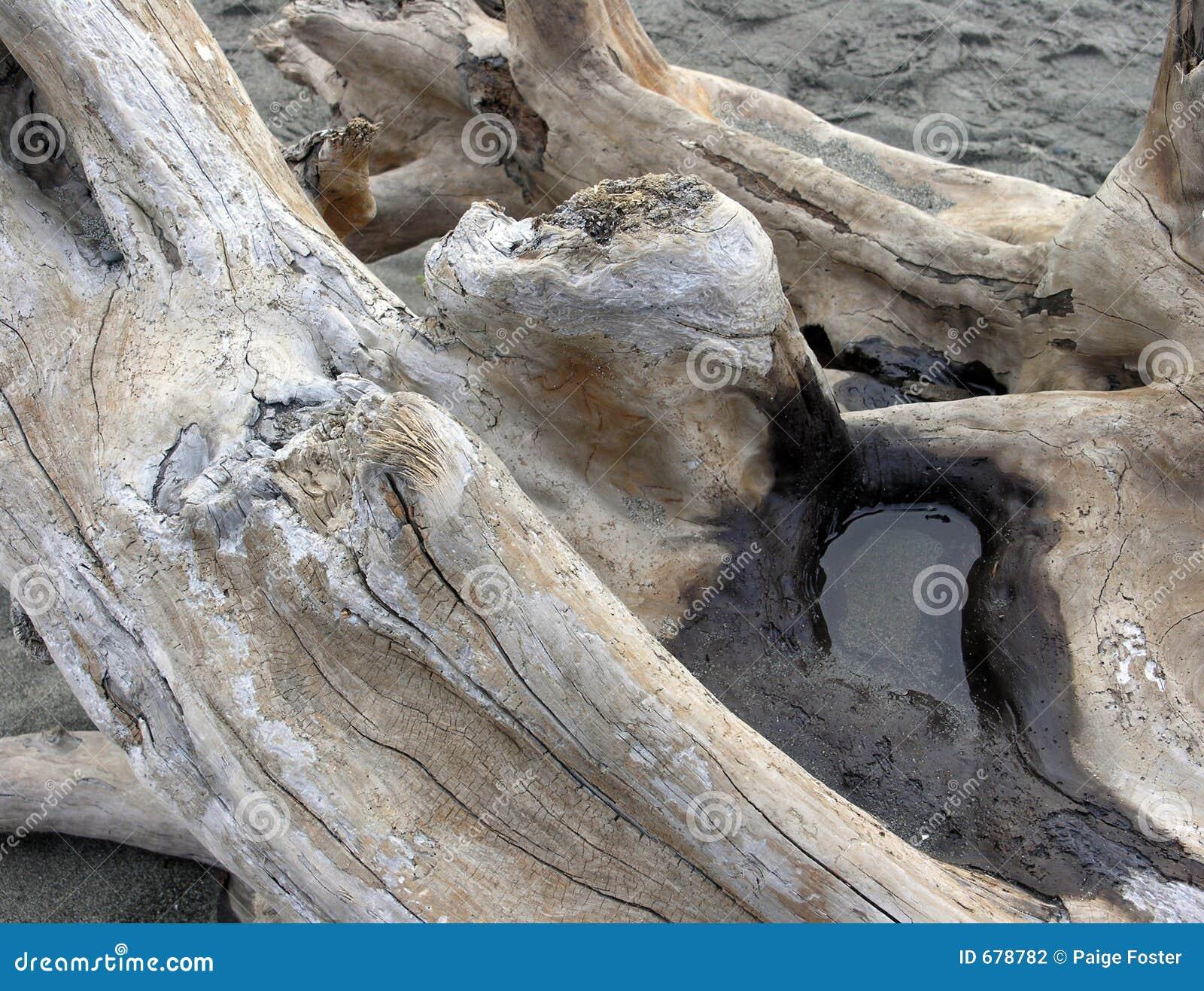 漂流木头水坑