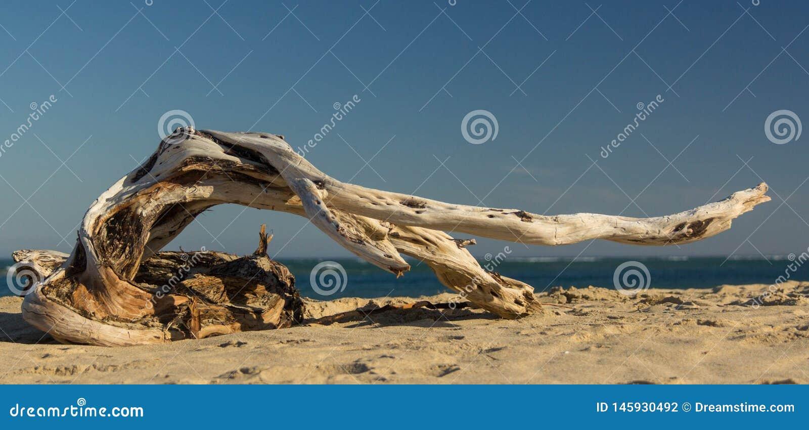 漂流木头舞蹈家