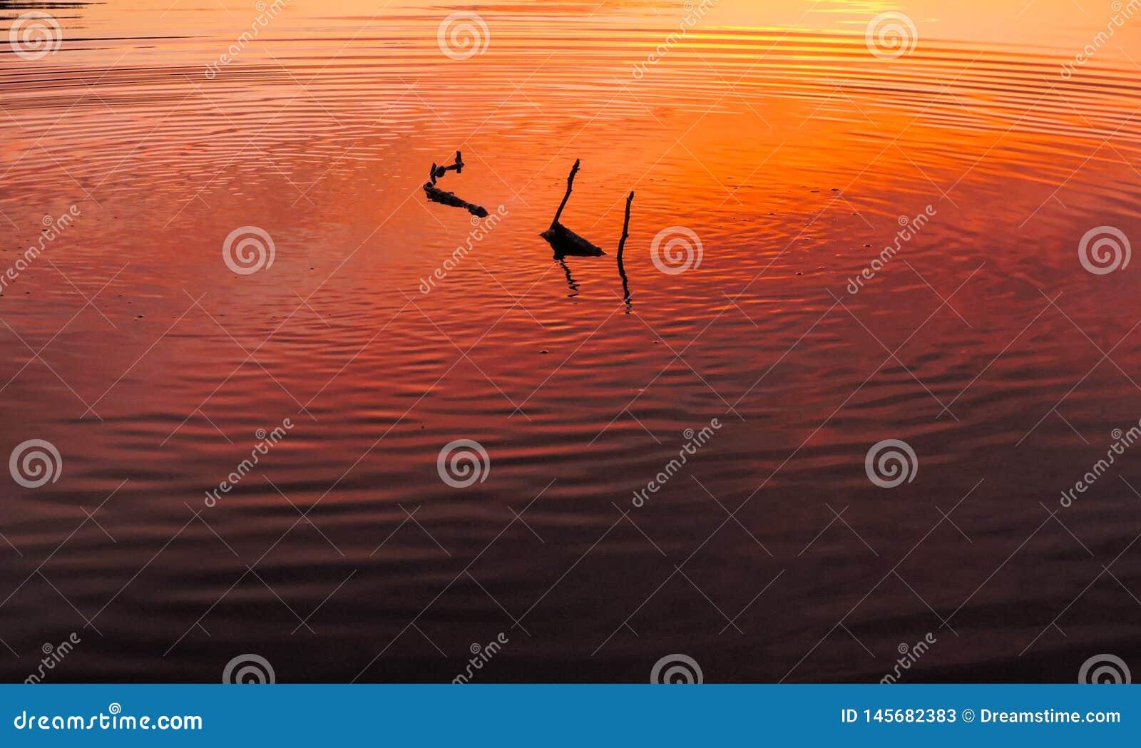 漂浮在日落的一个湖下的棍子