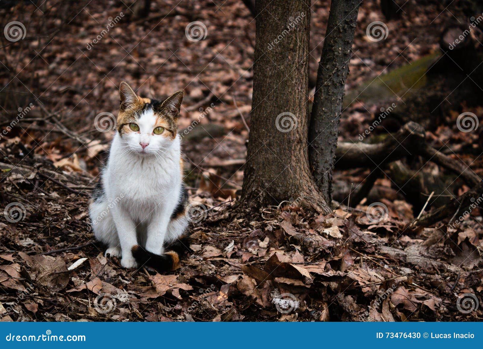 漫步在中央公园,纽约的三种颜色猫