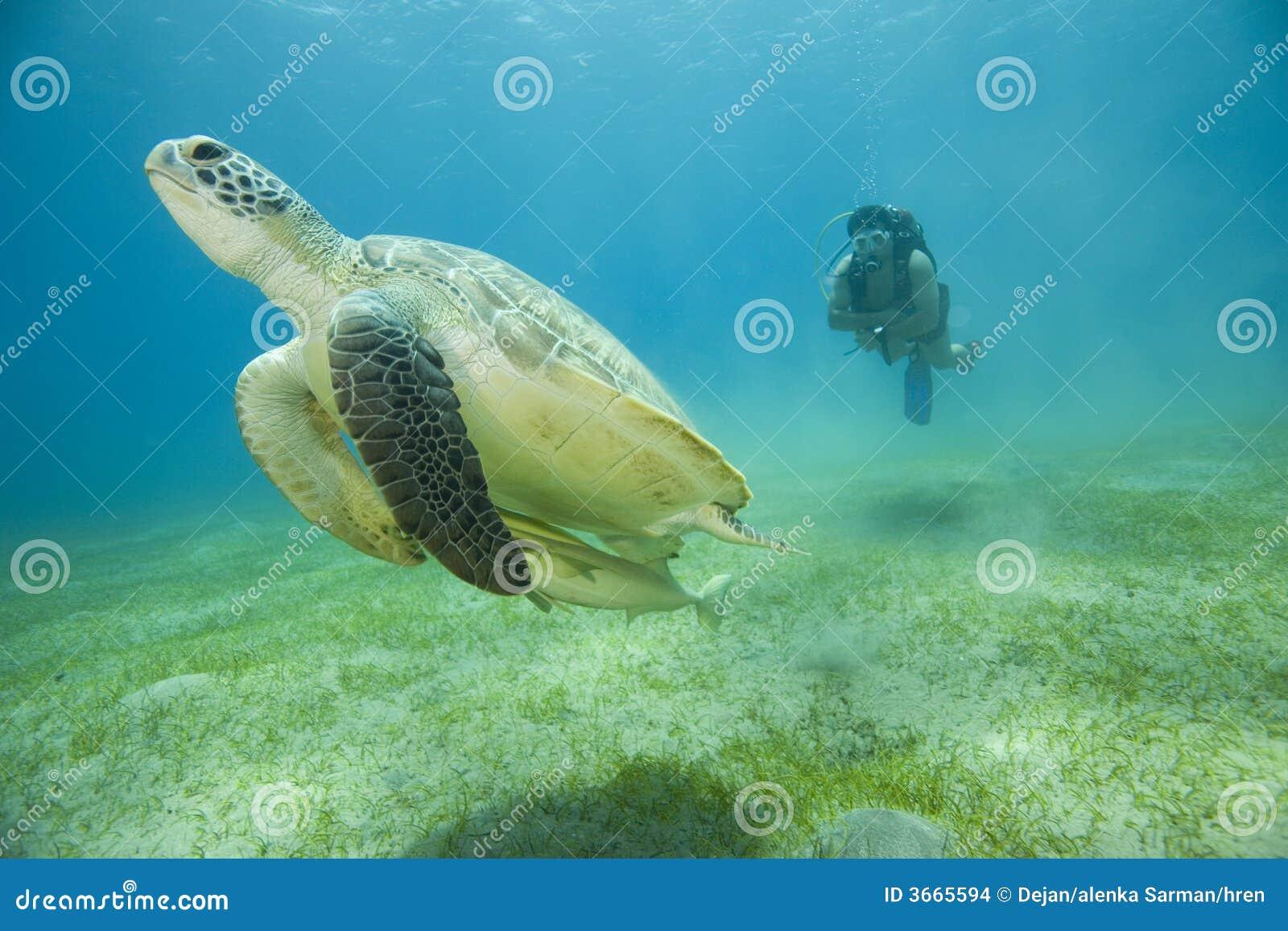 潜水员水肺乌龟