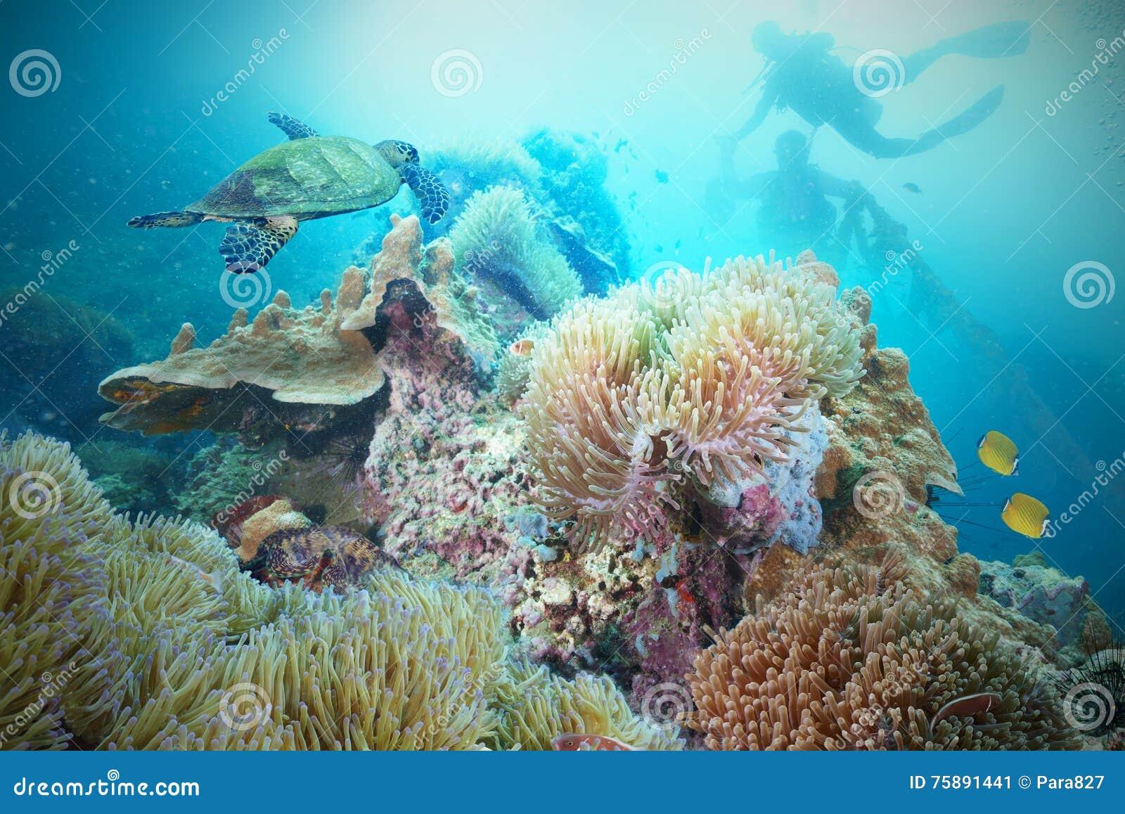 潜水员水肺海龟