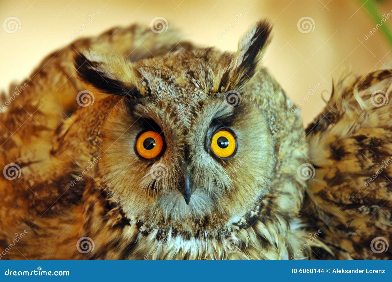 澳大利亚安全情报组织otus猫头鹰