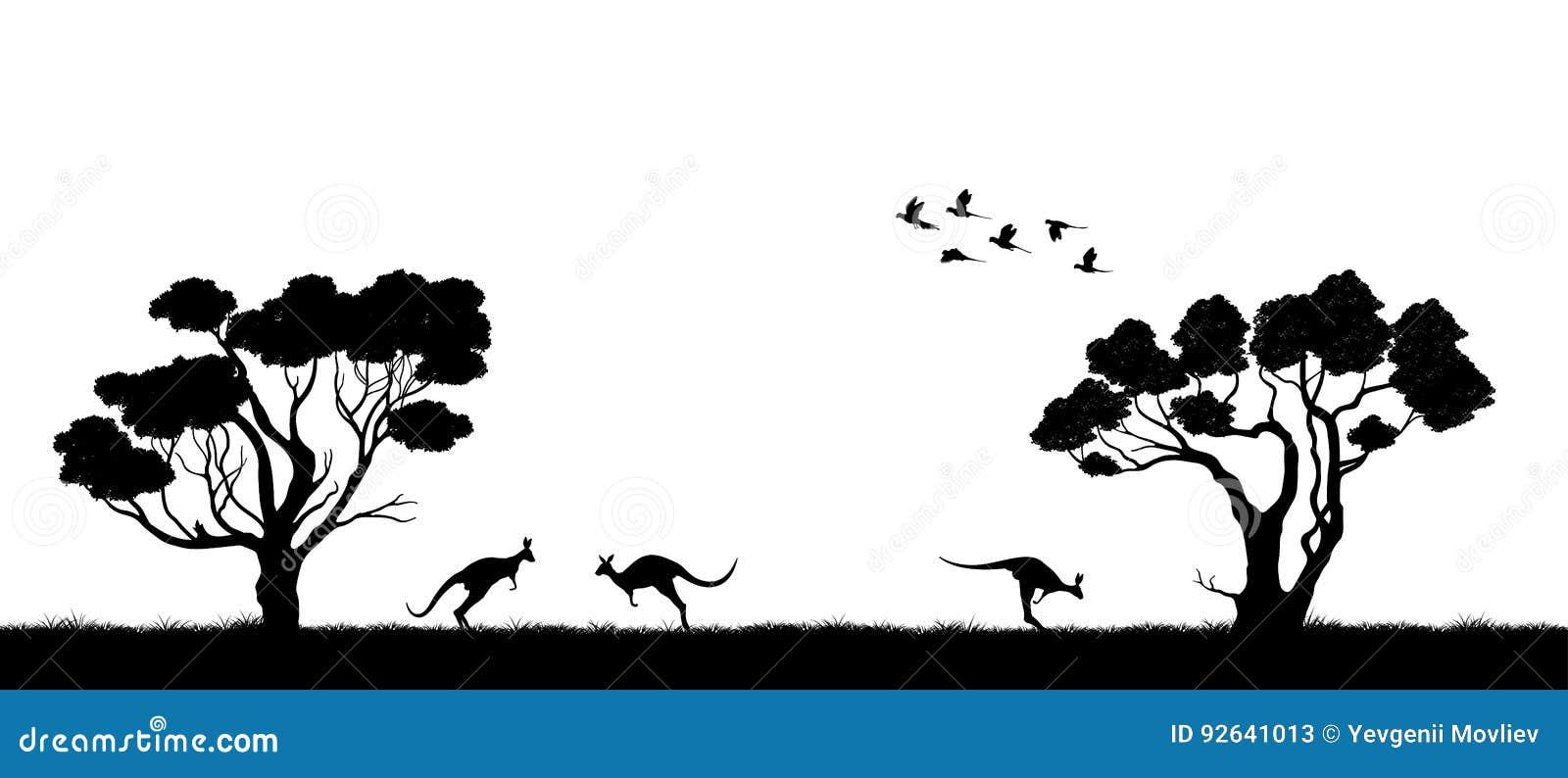 澳大利亚横向 树和袋鼠黑剪影在白色背景 澳大利亚的本质