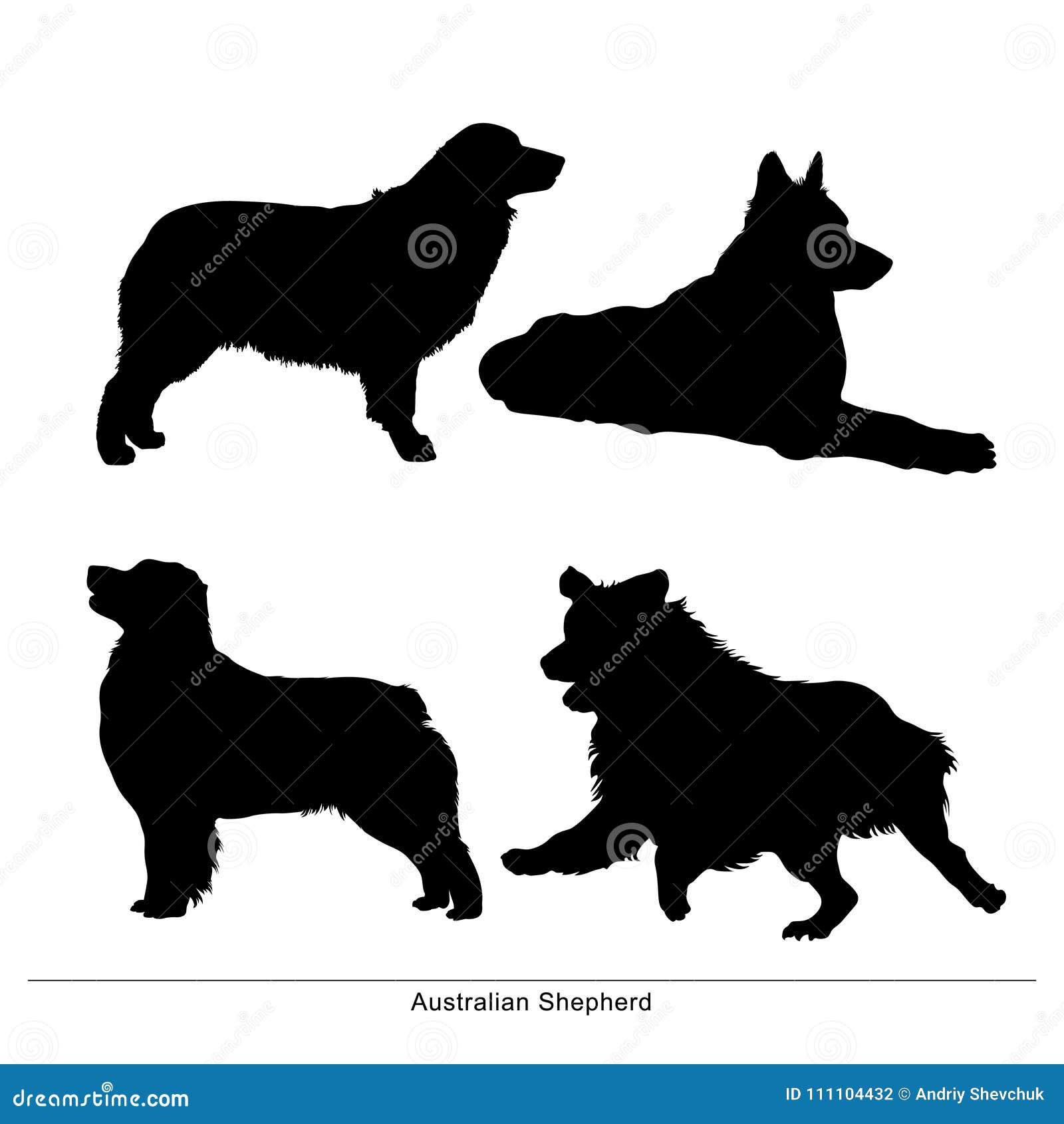 澳大利亚牧羊人 狗坐,摆姿势,说谎,奔跑,立场