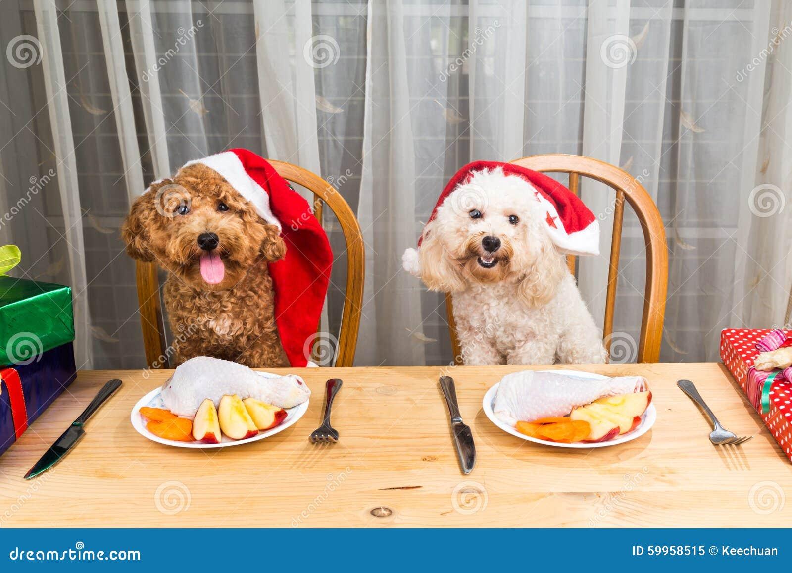激动的狗的概念在食用圣诞老人的帽子的可口生肉C