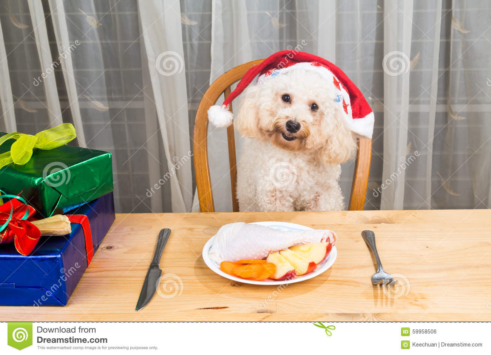 激动的狗的概念在食用圣诞老人的帽子的可口生肉Ch