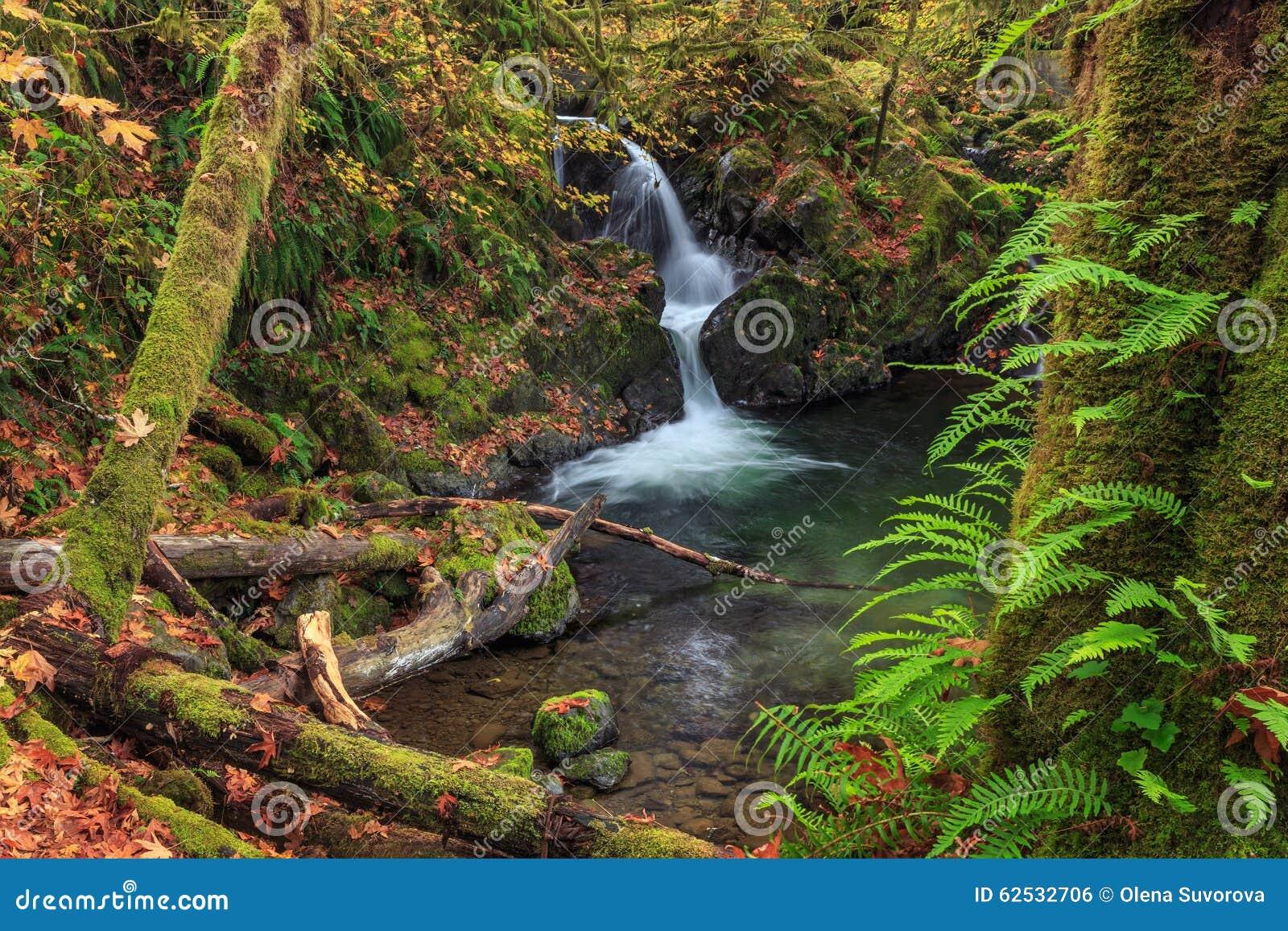 瀑布在Quinault公园