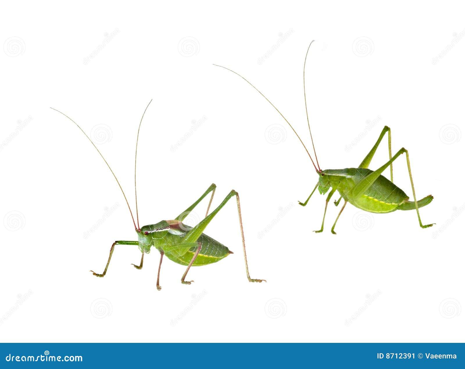 灌木板球运动女性绿色男