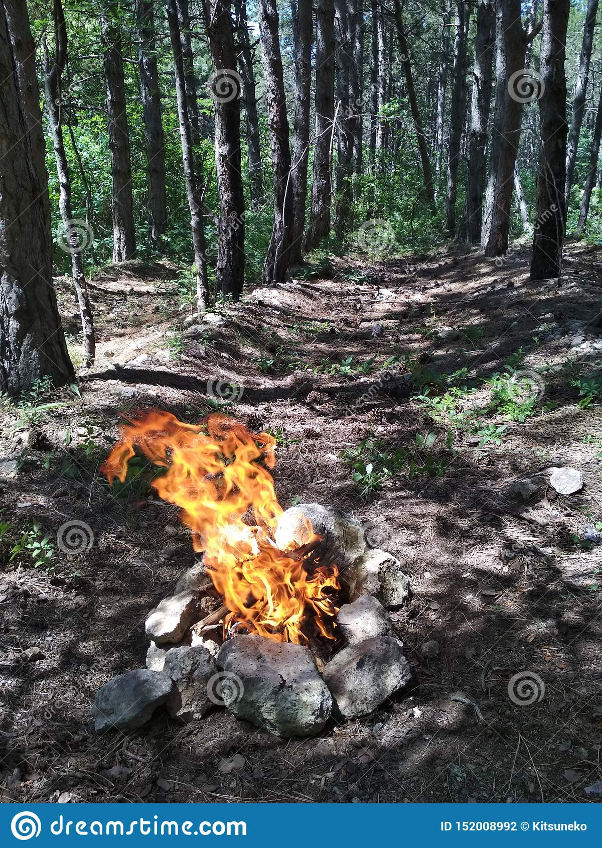 火在森林里