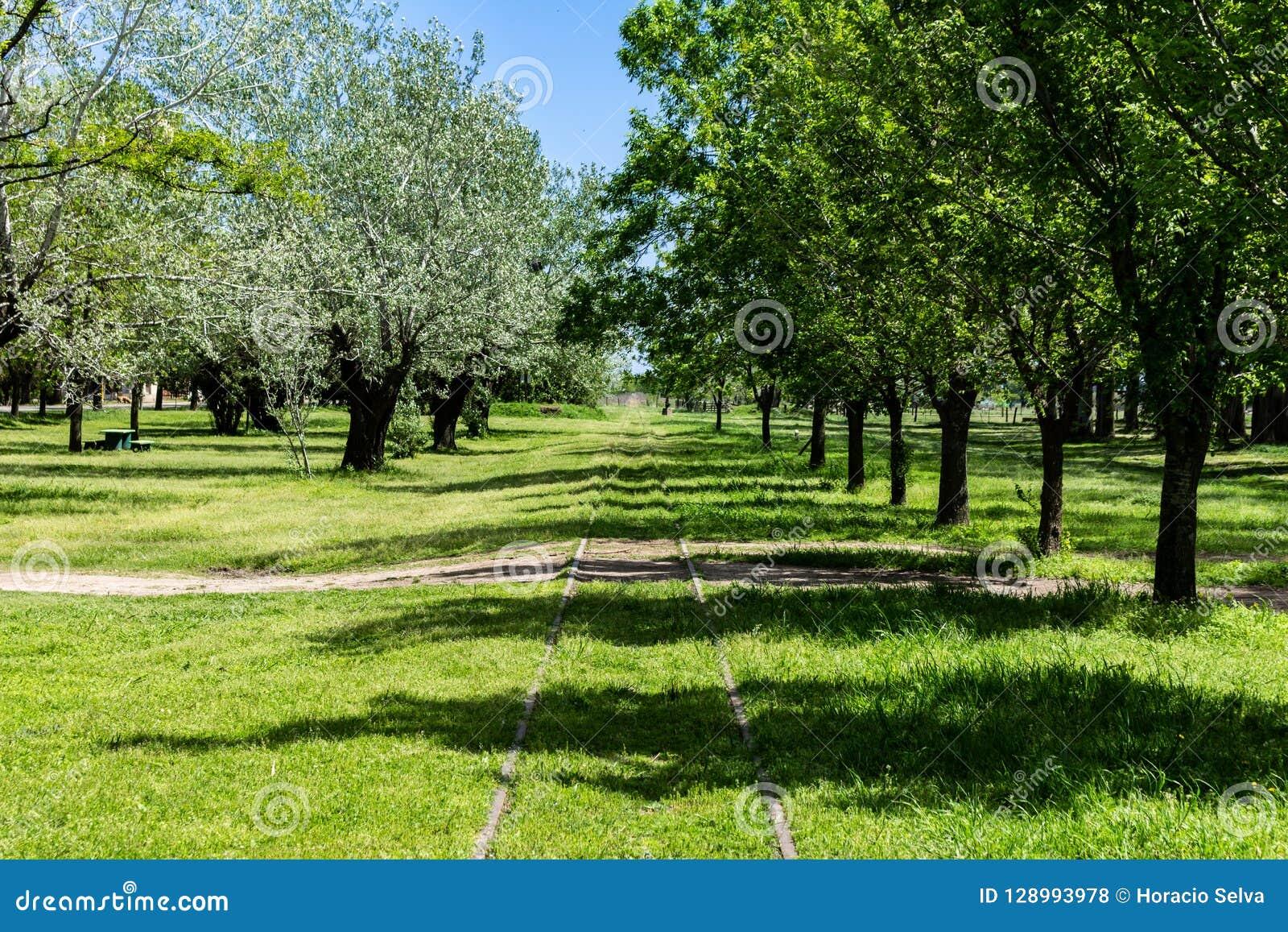 火车跟踪横渡树木繁茂的乡下