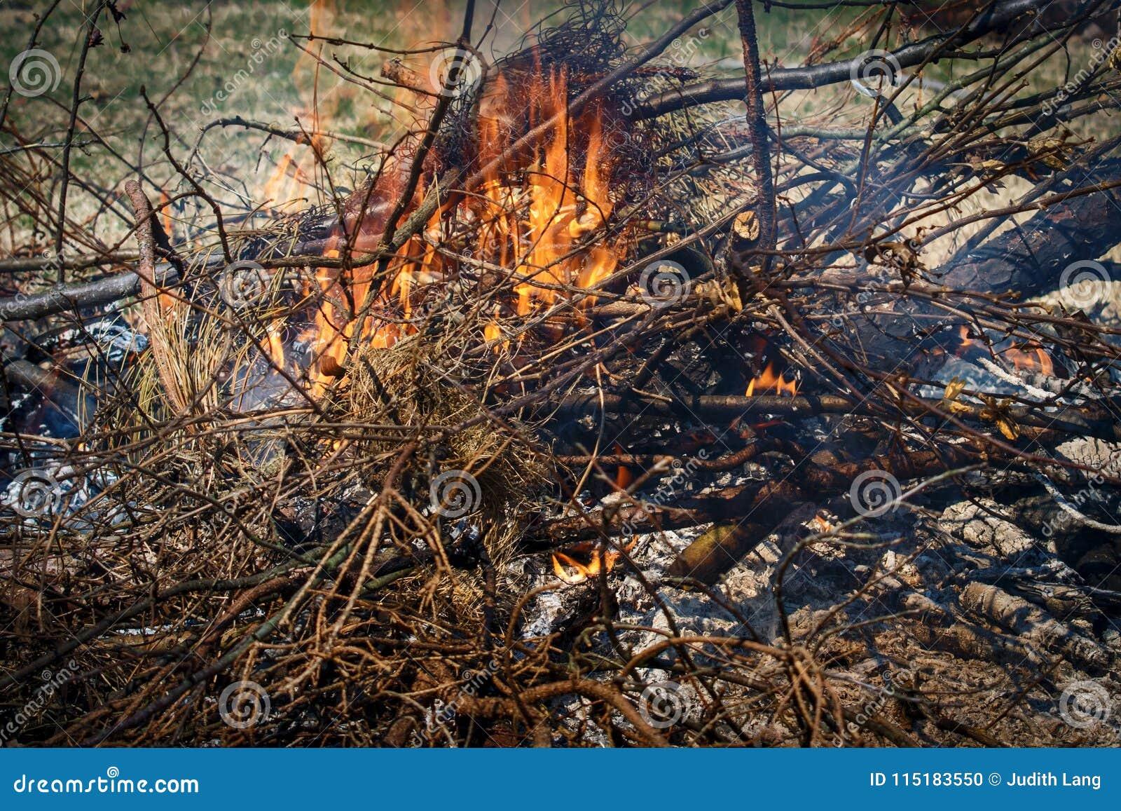 灼烧的分支和刷子和火焰