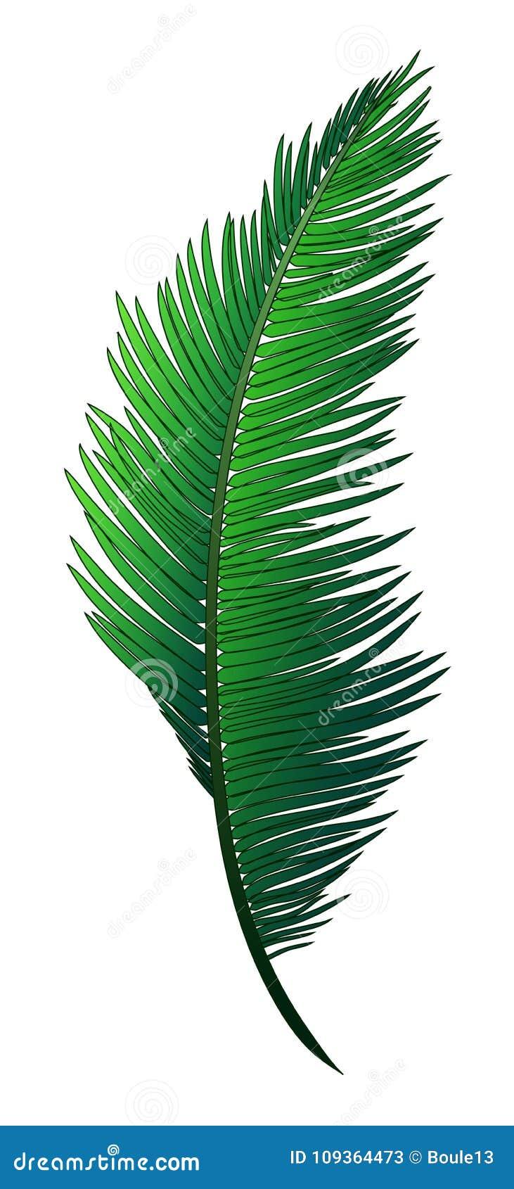 热带可可椰子现实绿色分支