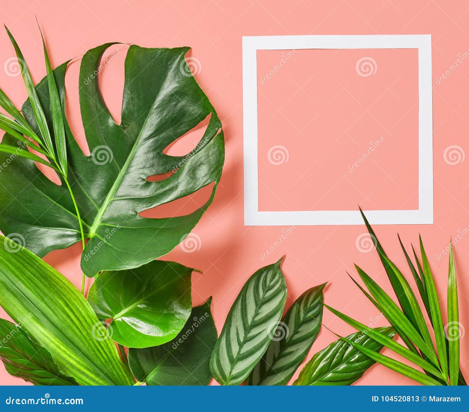 热带叶子和白色框架