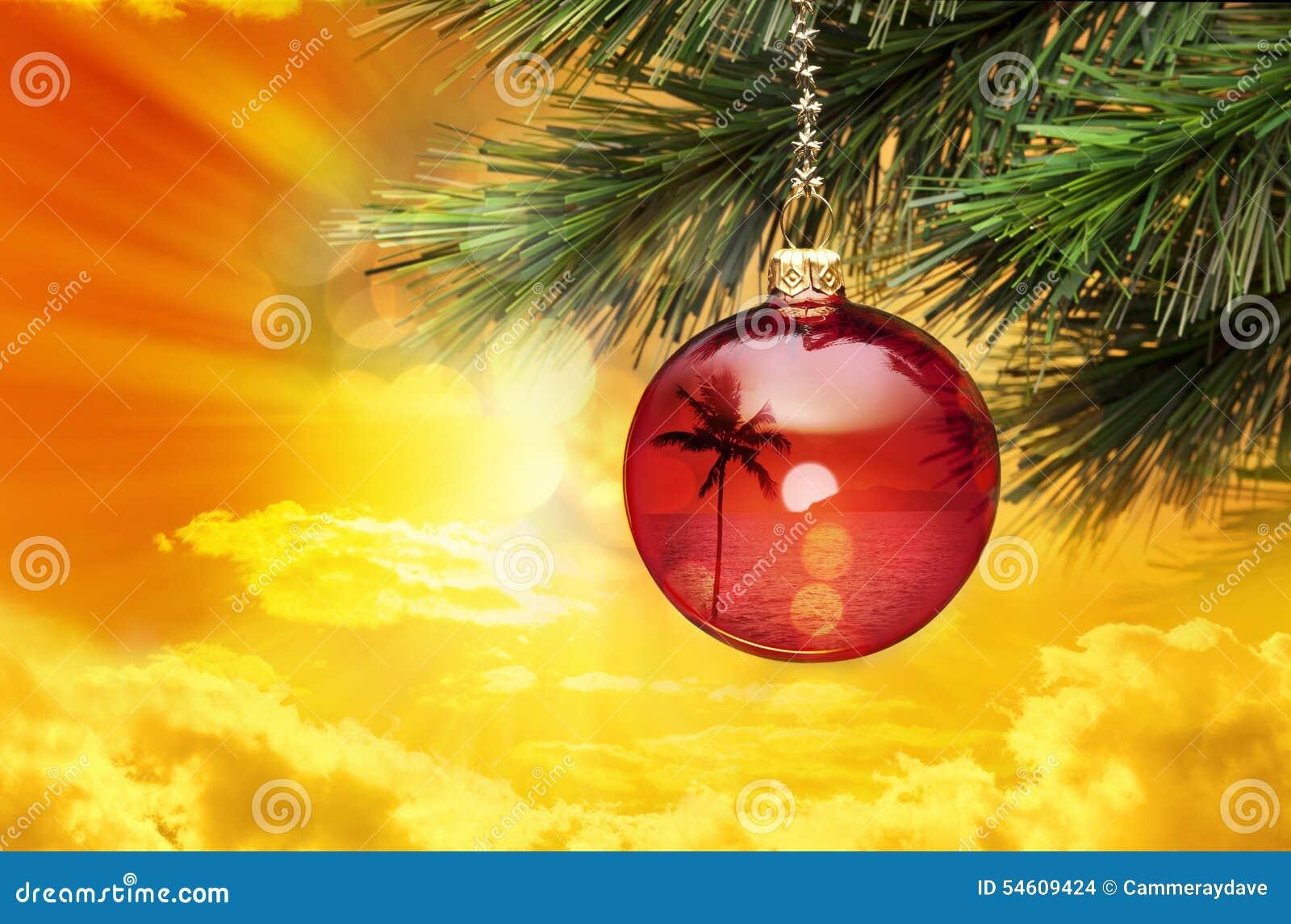 热带圣诞节棕榈树