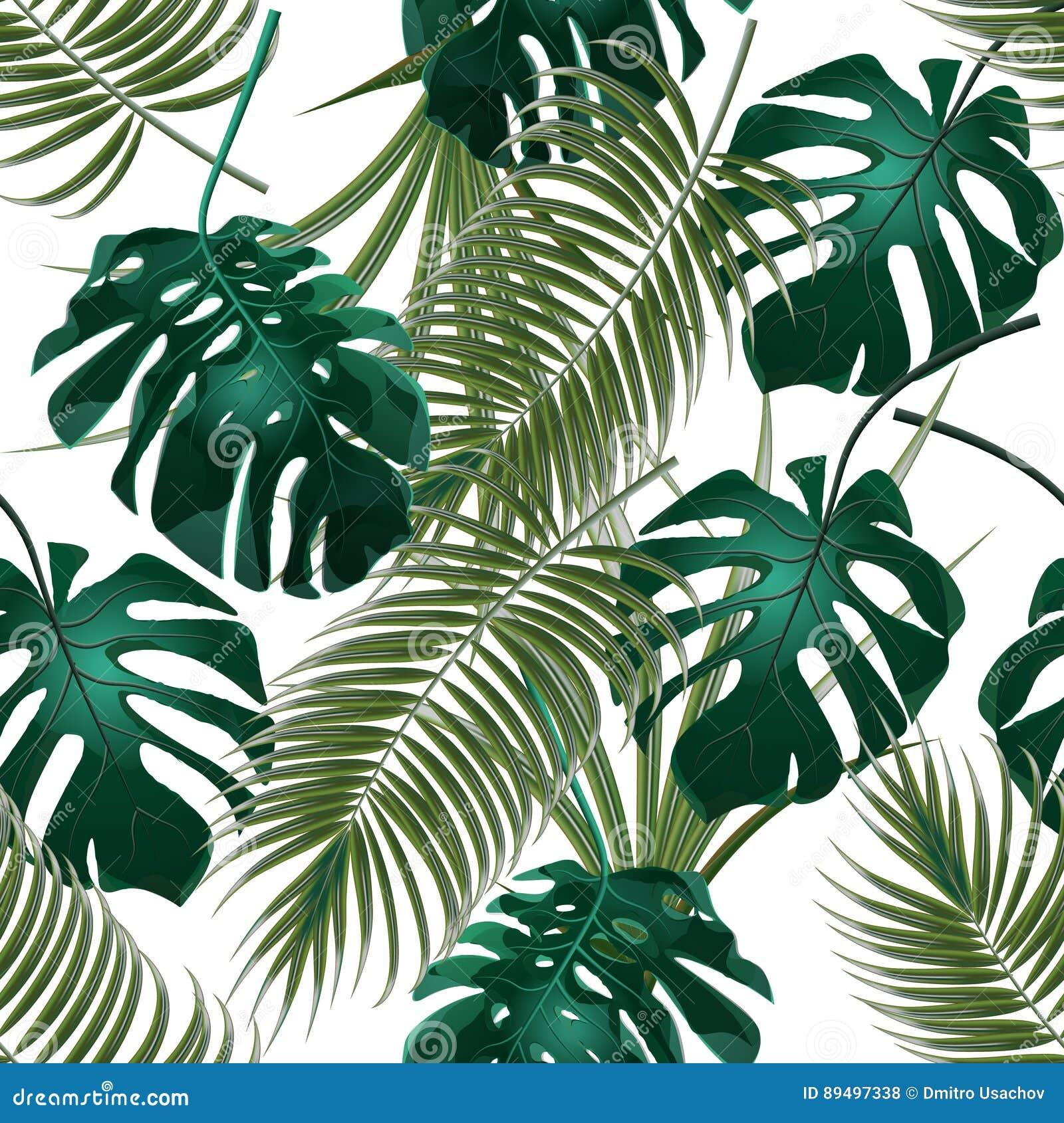 热带棕榈叶和monstera密林丛林  无缝花卉的模式 背景查出的白色