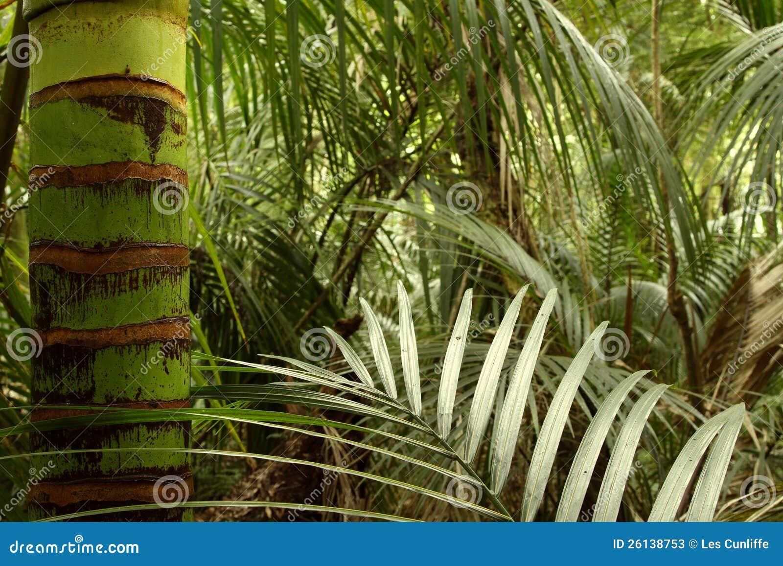 热带森林密林