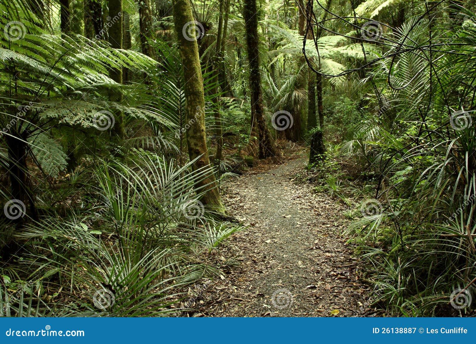 热带森林密林图片