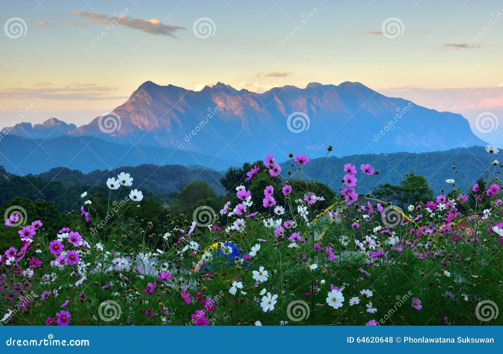 热带森林风景日落的.图片