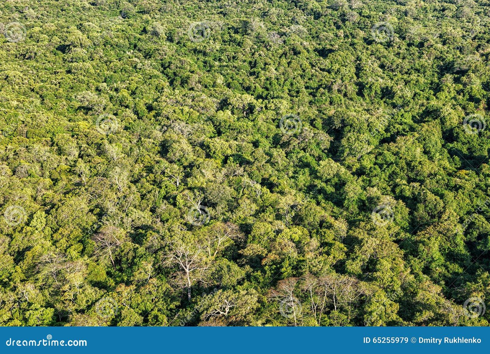 热带森林鸟瞰图图片