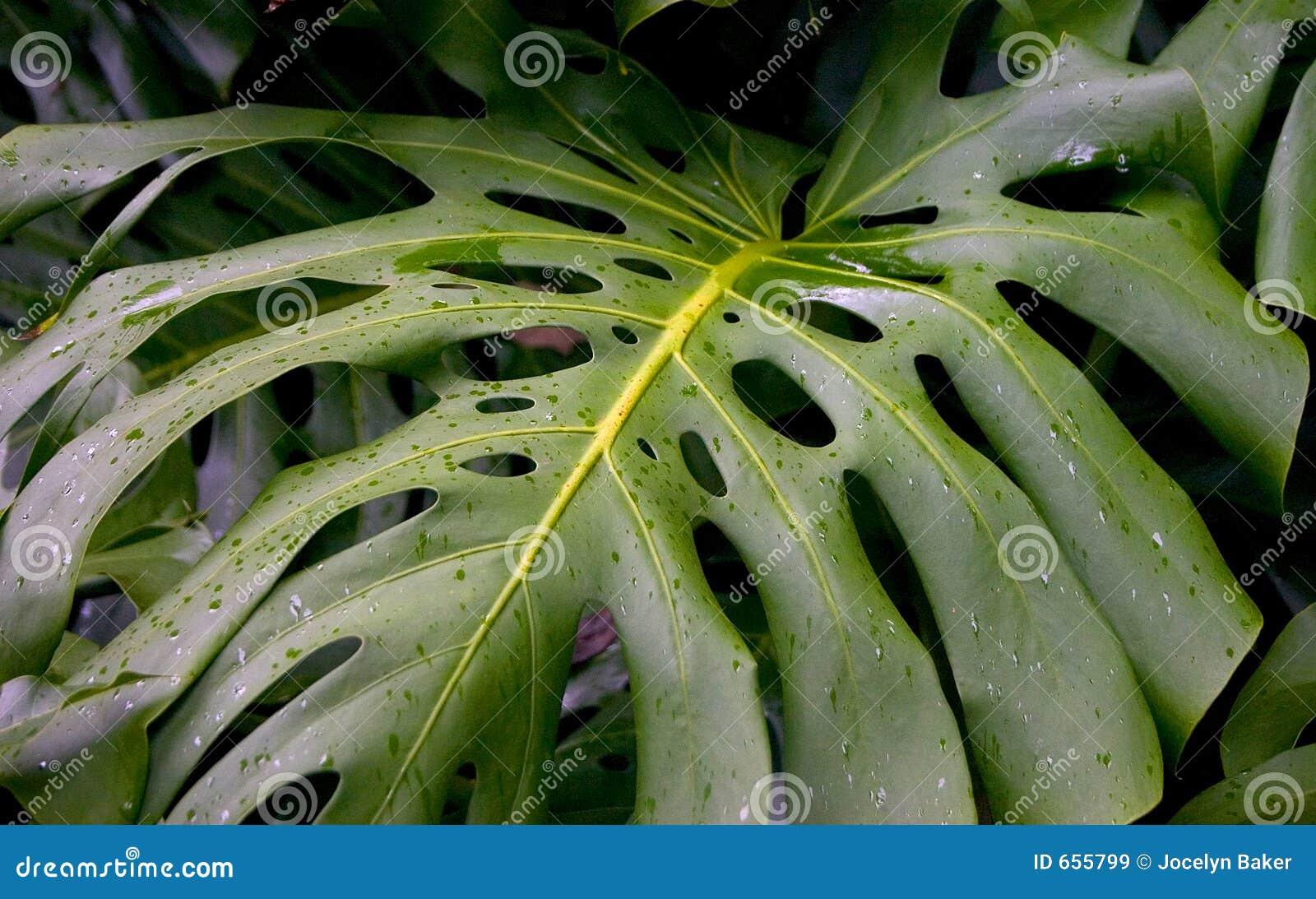 热带的叶子