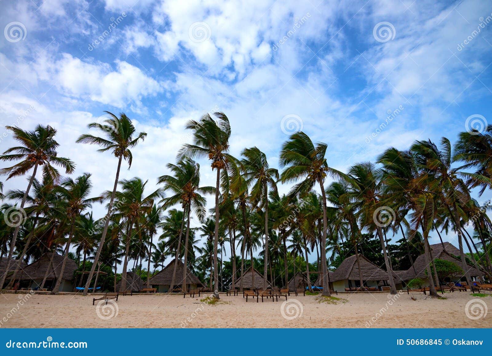Download 热带的手段 库存图片. 图片 包括有 海运, 海洋, 节假日, 沙子, scenics, 工厂, 天堂, 颜色 - 50686845