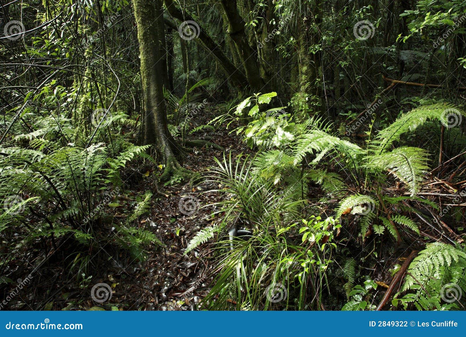 热带的森林图片