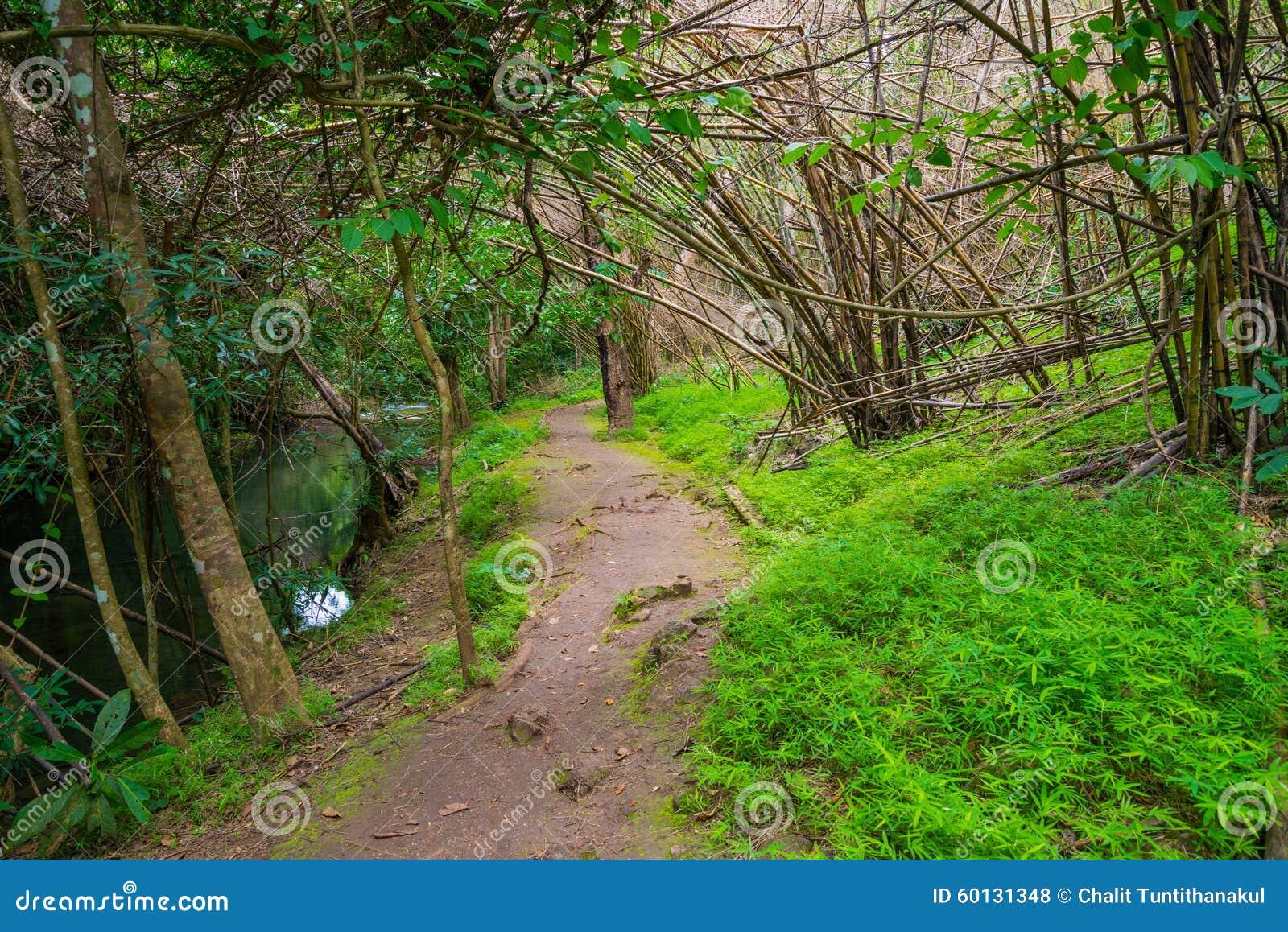 走的足迹在西部泰国热带森林里.图片