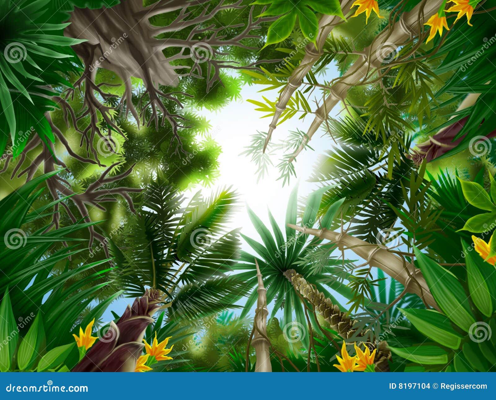 底部森林例证热带视图.图片