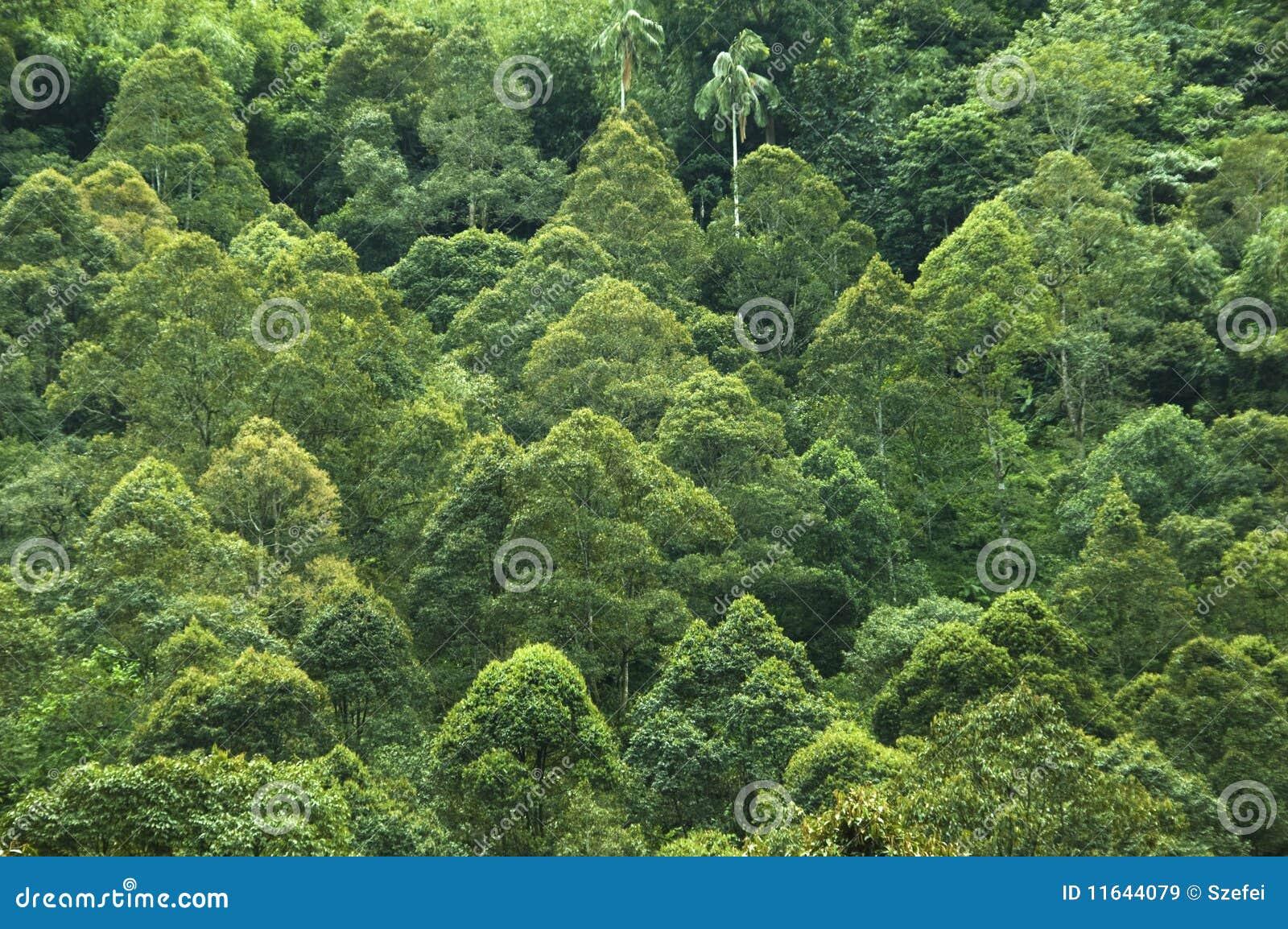 热带的雨林