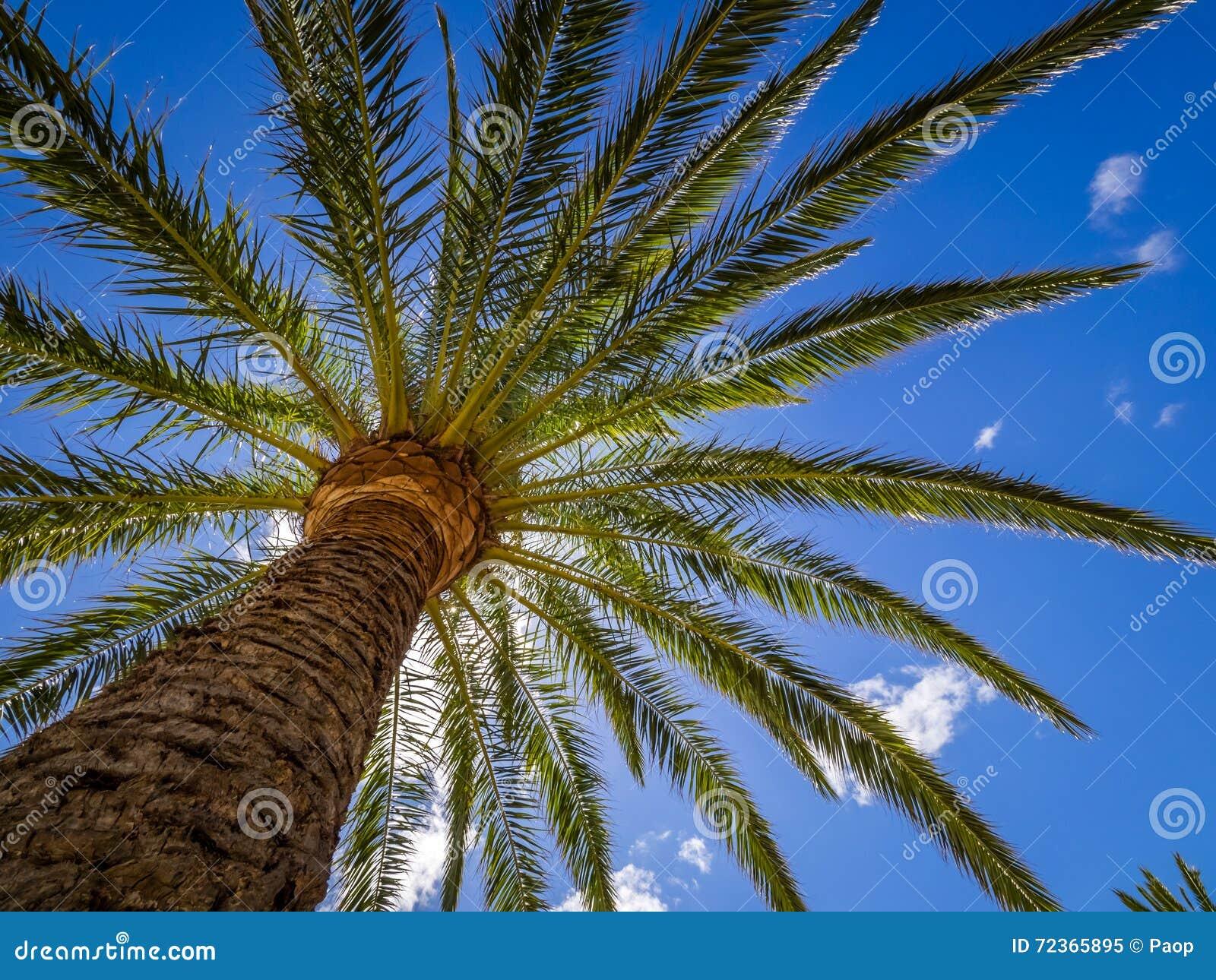 热带palmtree午间