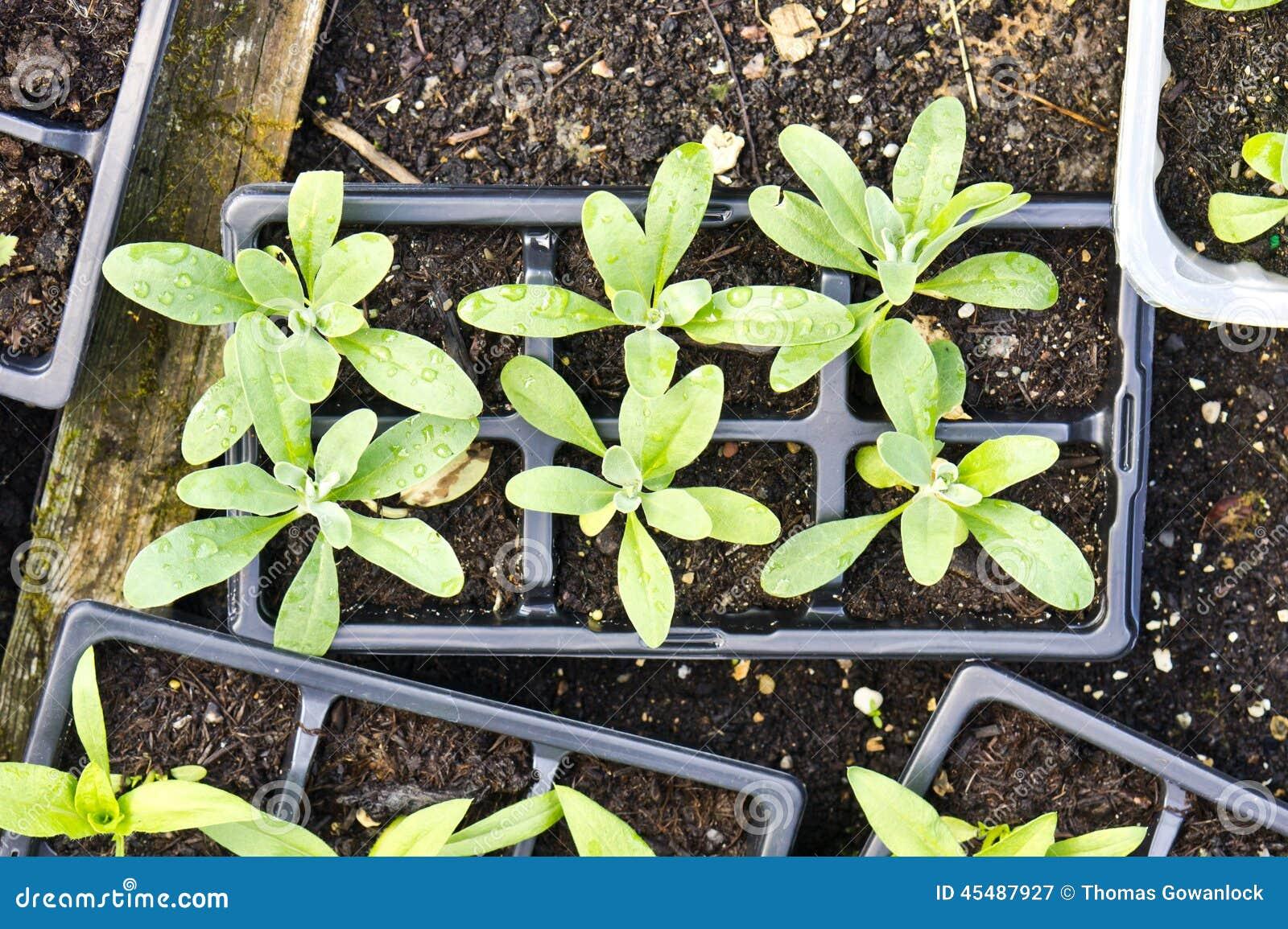 照片种植种子年轻人