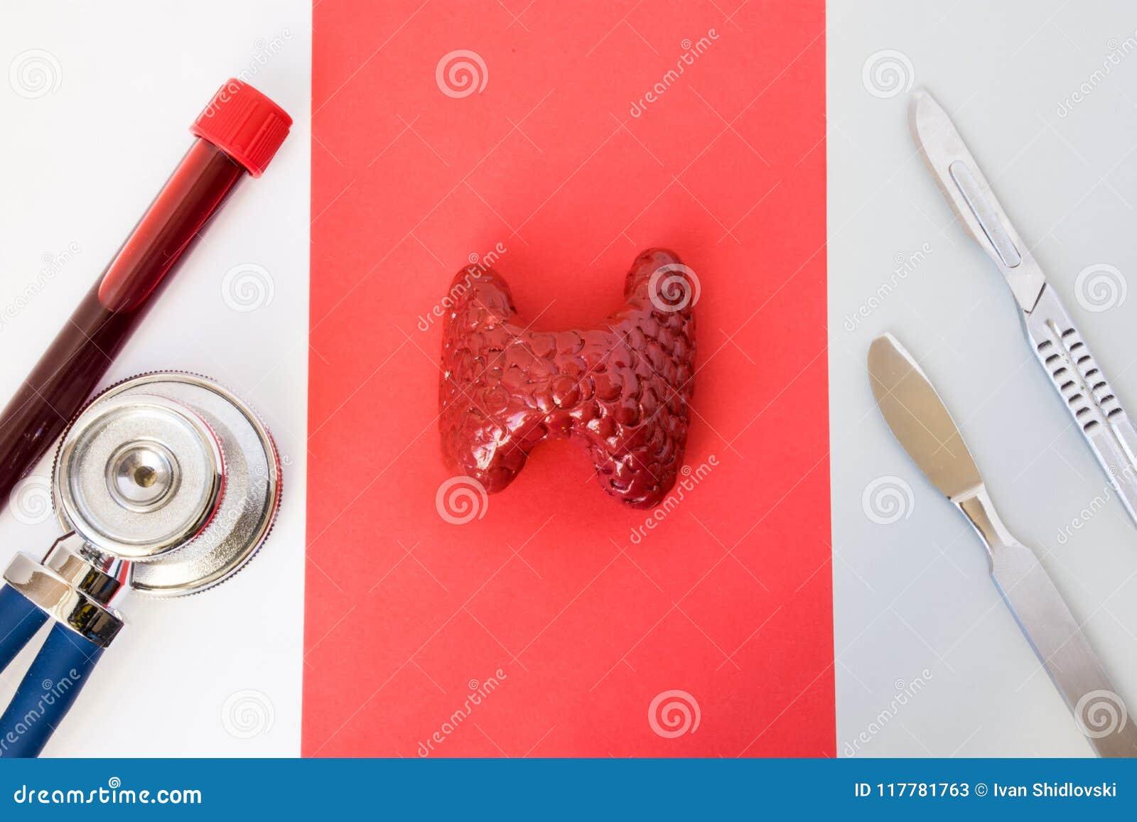 照片诊断、甲状腺手术或者操作想法  甲状腺解剖形象模型在听诊器, laborato附近说谎
