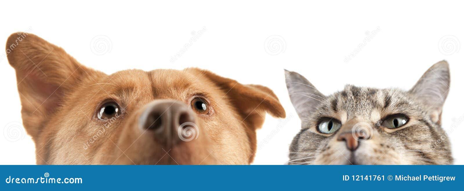 照相机猫非常关闭狗.