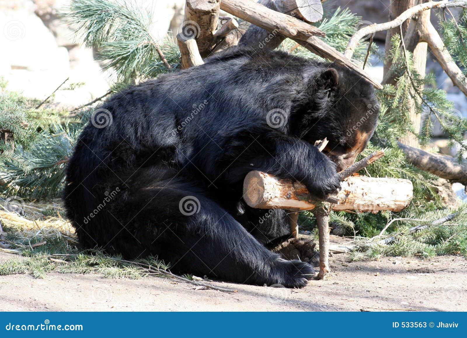 Download 熊黑色 库存图片. 图片 包括有 哺乳动物, 下跌, 爪子, 通配, 毛皮, 森林, 故事, 敌意, 桂香, 北美灰熊 - 533563