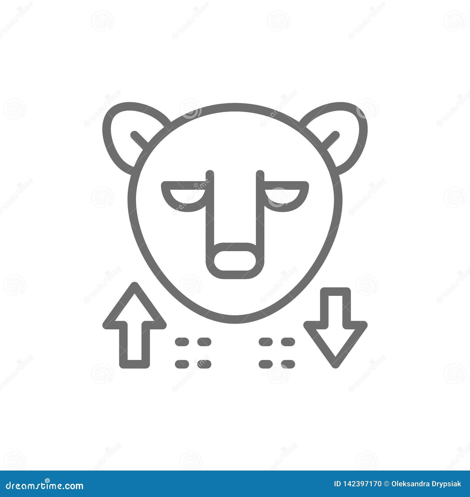 熊,股票市场,财务贸易线象