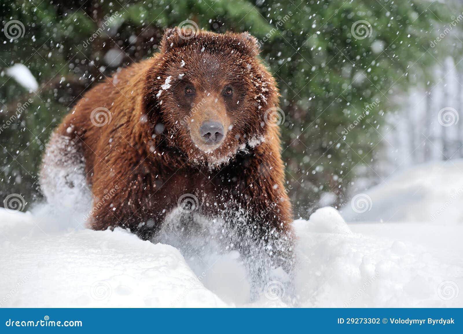 熊乃瑺yak9�+�,_mr: no pr: no 0 290 0 熊 id 29273302 © volodymyr byrdyak