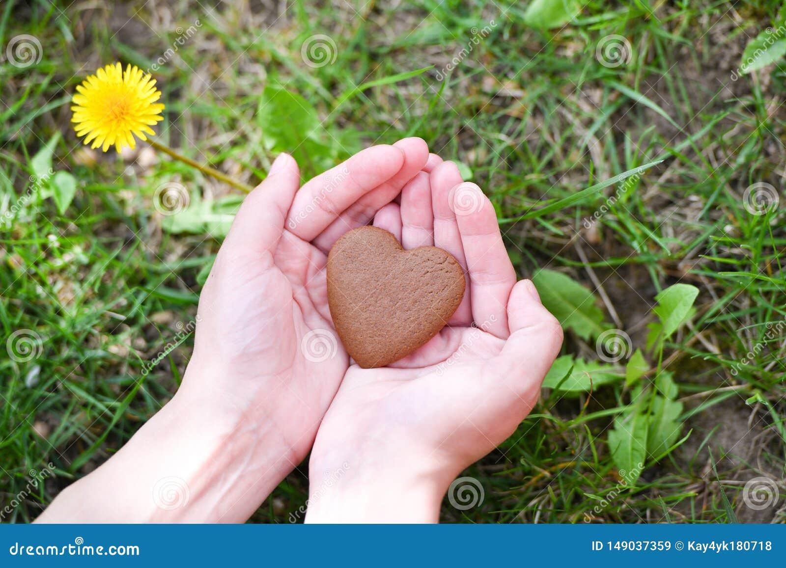 爱和情人节概念 在心脏形状的男性手在绿草领域背景的