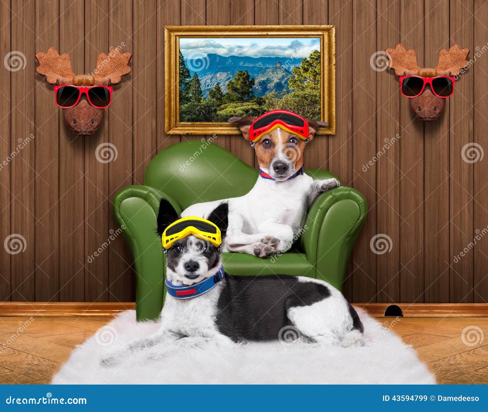 爱夫妇沙发狗