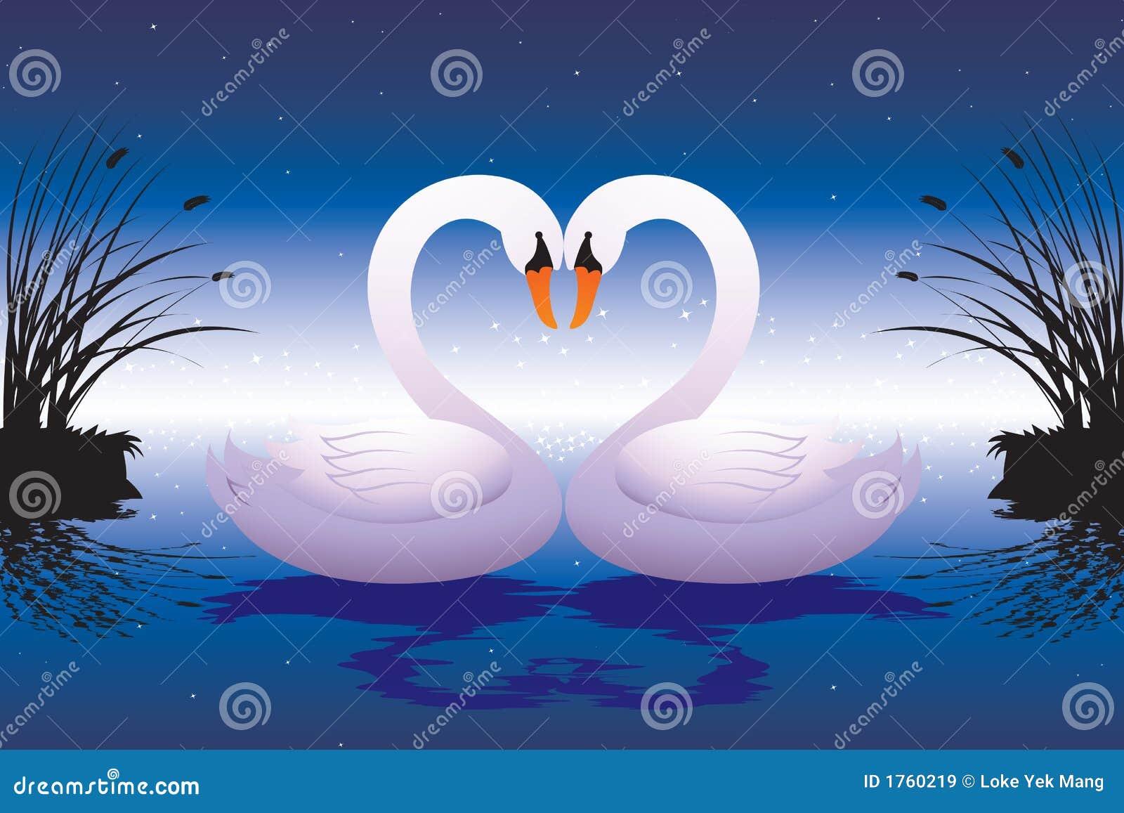 爱恋的天鹅