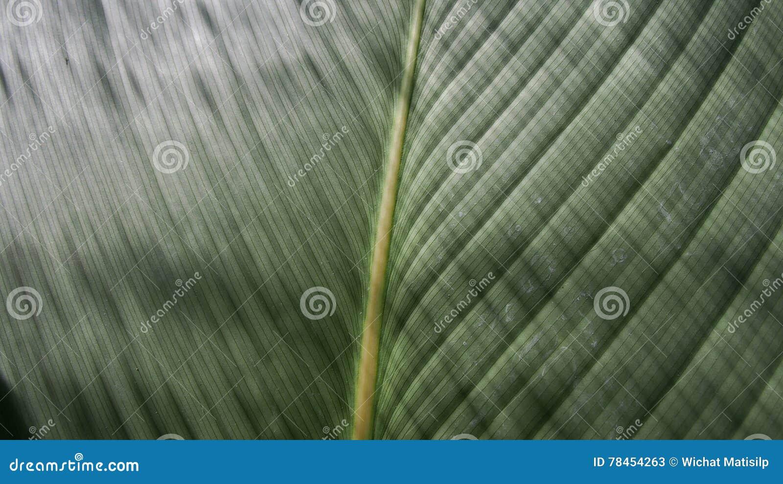 爱树木的人叶子是发光的条纹