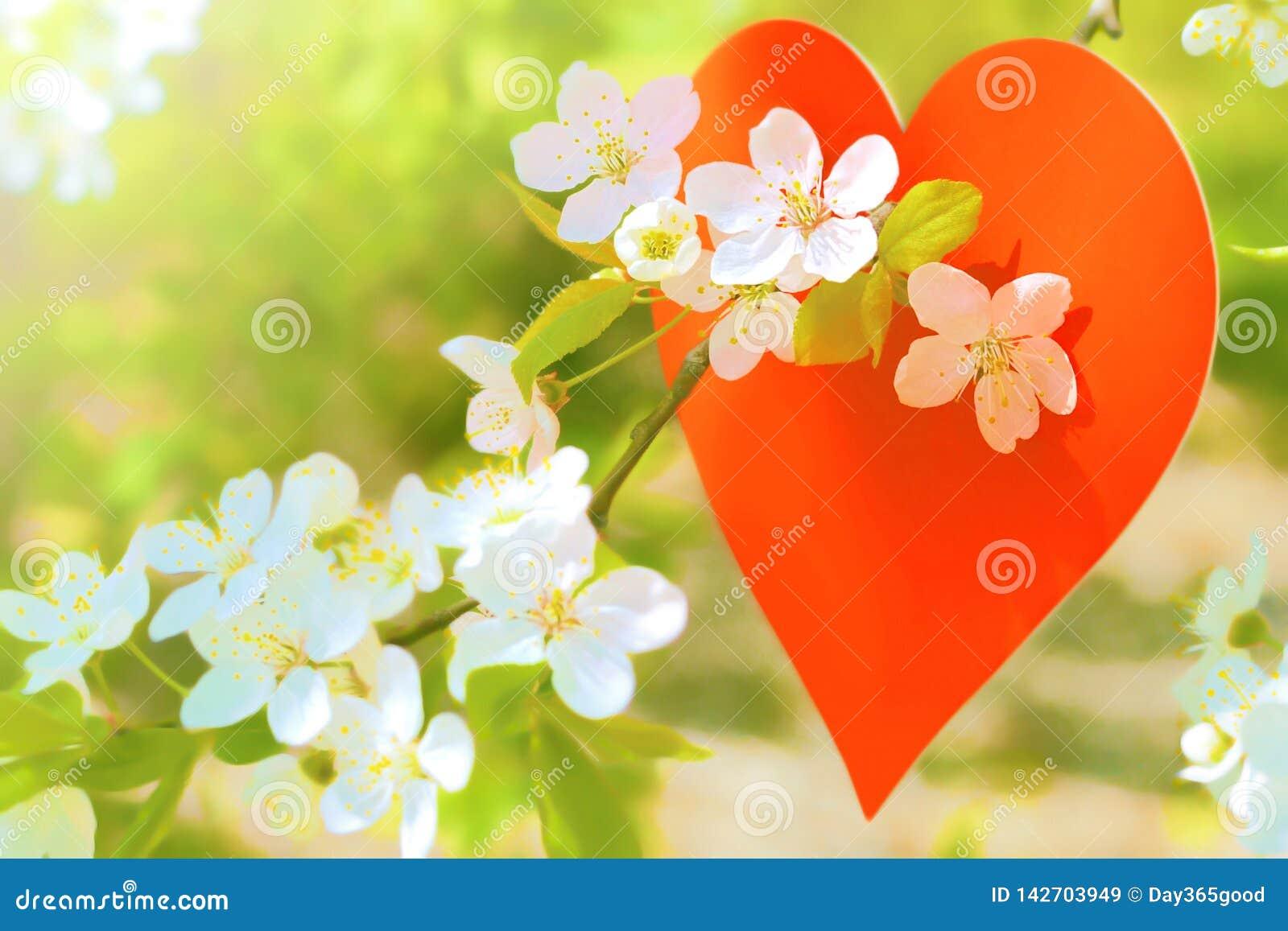 爱,开花的庭院,春天,红心 开花的李子分支在春天庭院