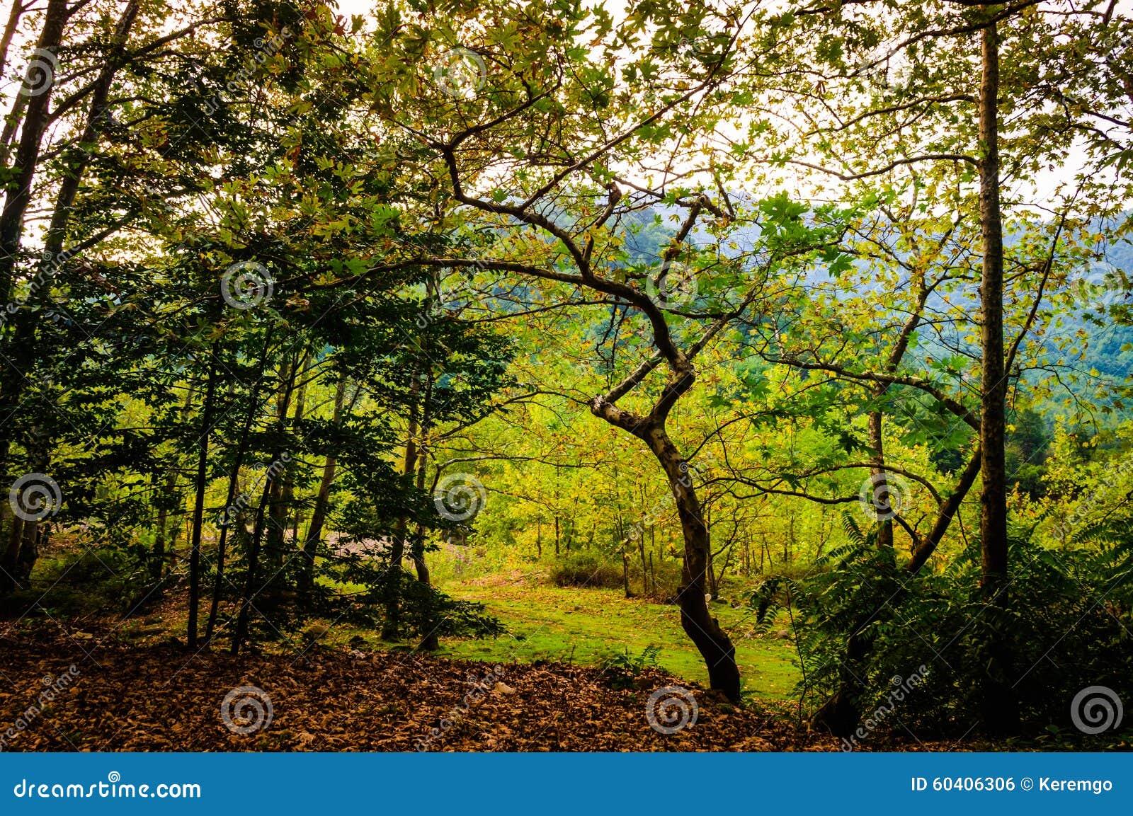 爱琴海地区秋天森林
